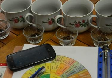 Identificando los aromas de cada café usando café fresco.